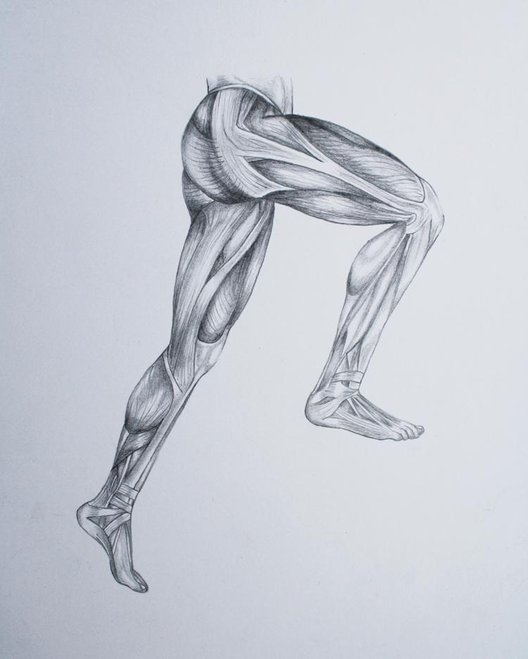 leg muscles drawing -#main